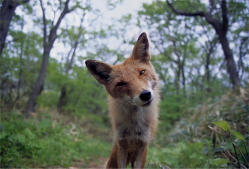 foxsquirrelly.jpg